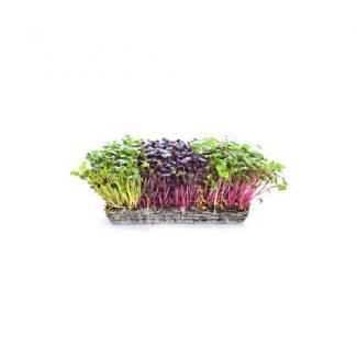 Healthy Heart and Microgreens